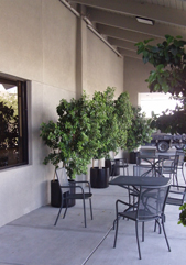Holmes Tuttle Outdoor waiting area